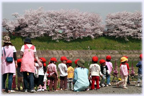 幼稚園児の散歩