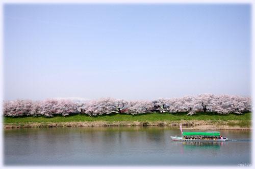 船から花見@白石川