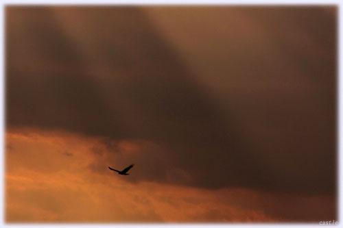 2009年へ向けての飛翔