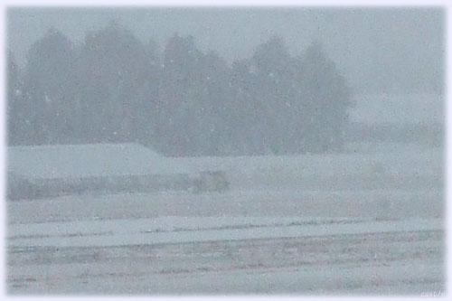 吹雪でかすむ木