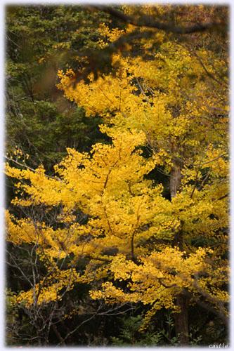 秋保の紅葉