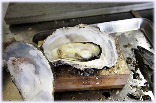 ふんわりぷっくり美味しい牡蠣