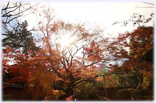 松島の紅葉