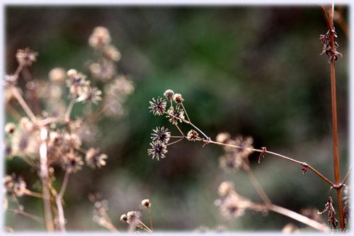 冬枯れの草