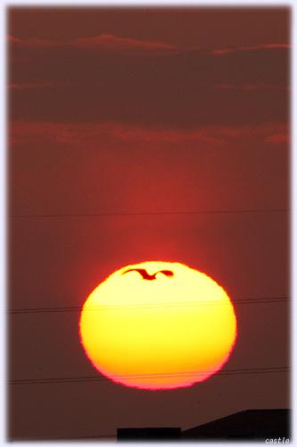太陽にカラス