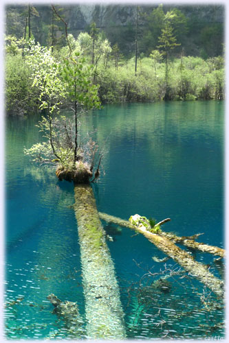 倒木の上に木