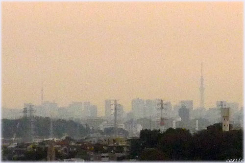 新横浜プリンスから眺めるタワーとツリー
