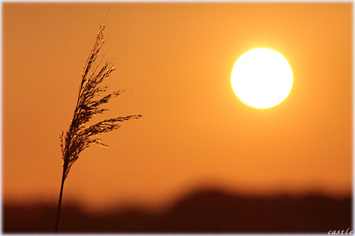 伊豆沼の朝