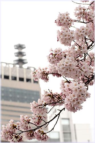 桜とSS30