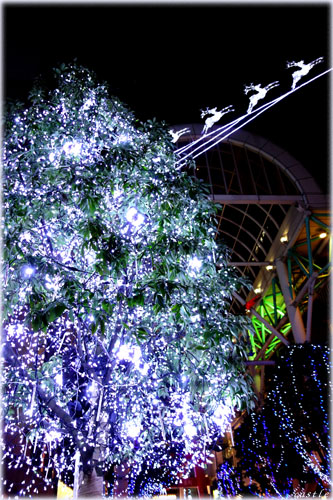 光のツリー