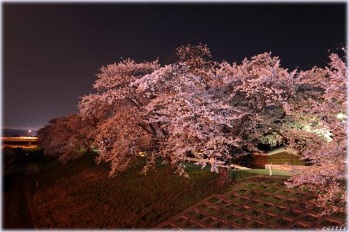 一目千本桜(夜桜)
