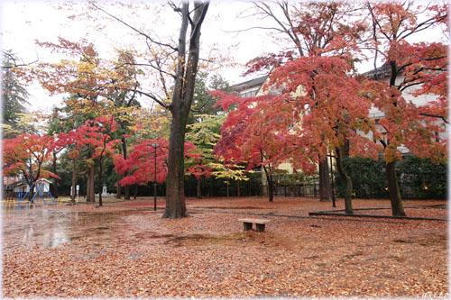 勝山公園の紅葉