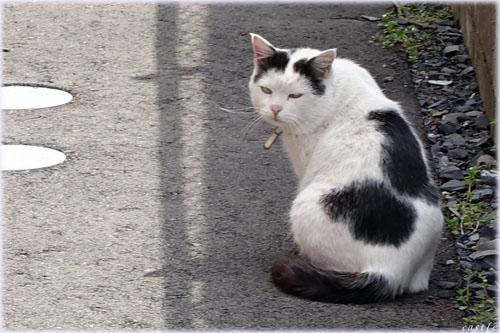 ブサかわいい猫