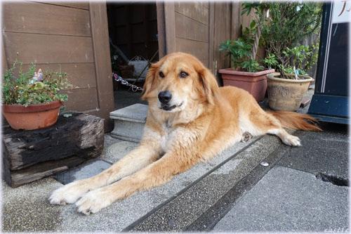 犬@おはらい町