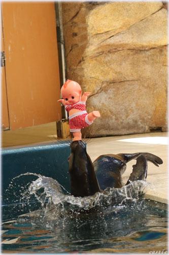アシカ@鳥羽水族館