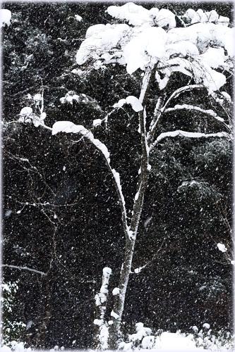 雪の秋保大滝