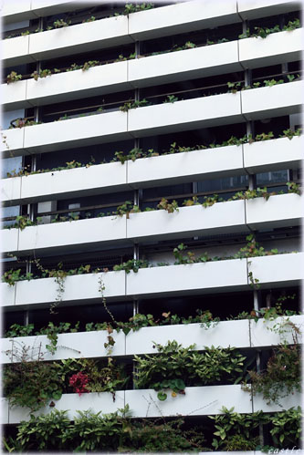 都市のグリーン化