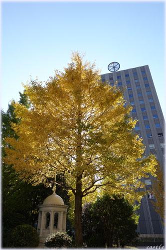 宮城県庁前の銀杏