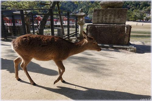 厳島神社付近を散策