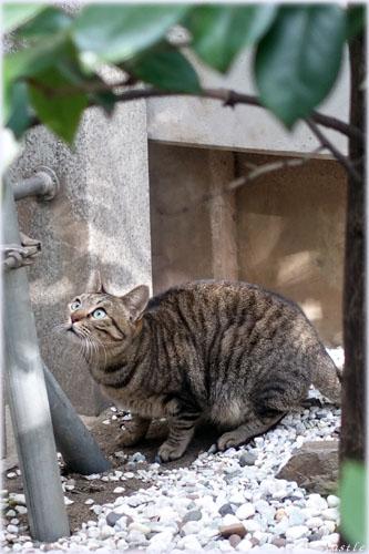 露天神の猫