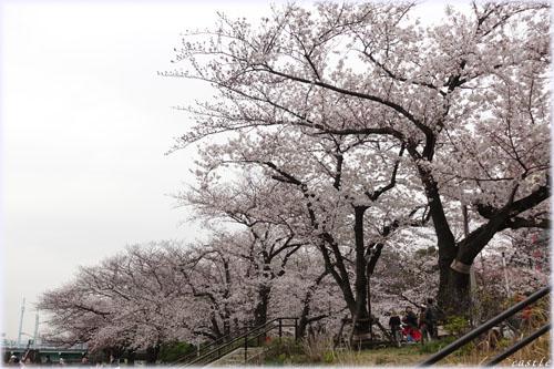 お花見@隅田川