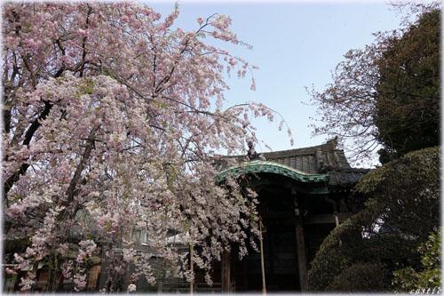 西日暮里の諏方神社