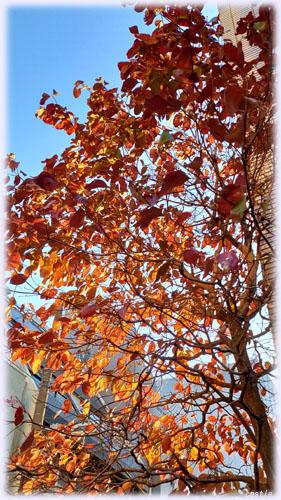 上野の紅葉