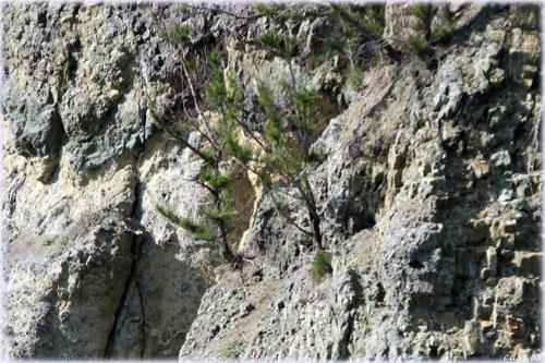 父島・岩場
