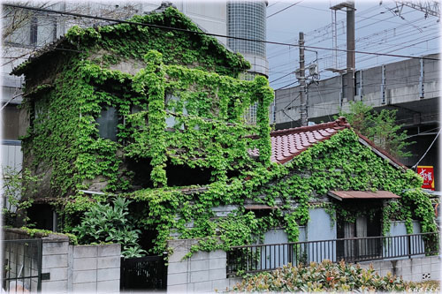 植物に飲み込まれた家