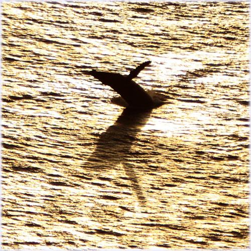 夕焼けジャンプクジラ