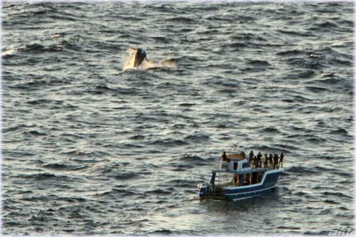 子クジラのブリーチング