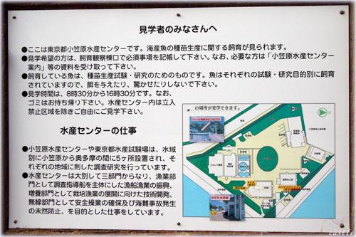 小笠原水産センター。