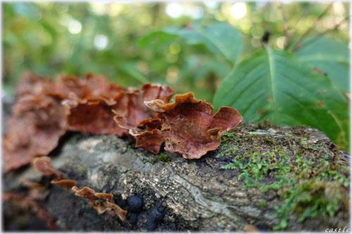 森林公園で菌活