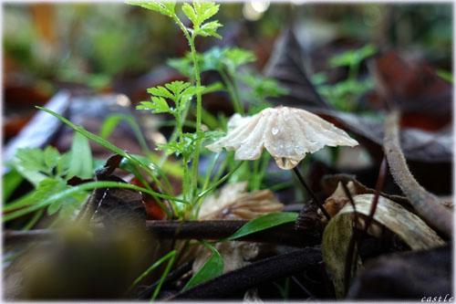 台原森林公園で菌活