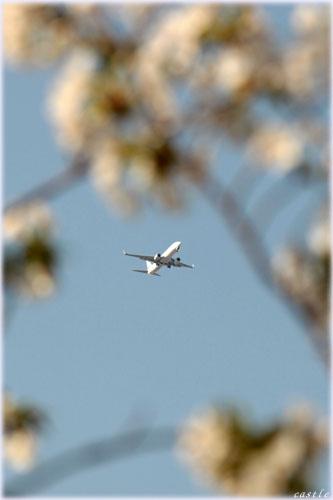 桜と飛行機