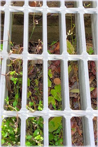 牢獄キノコ